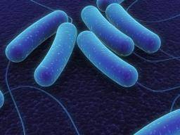 Whole-body vibration changes the microbiome, lowers inflammation