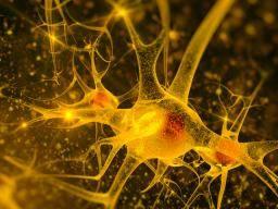 Fungus 'may cause symptoms of Parkinson's disease'