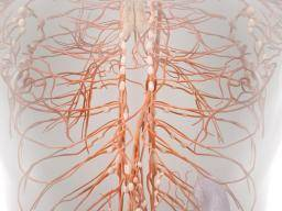 Lymphatic drainage massage: How-to guide and benefits