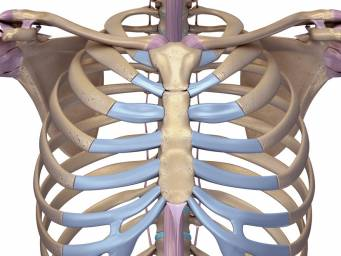 Xiphoid process: Pain, lump, and removal