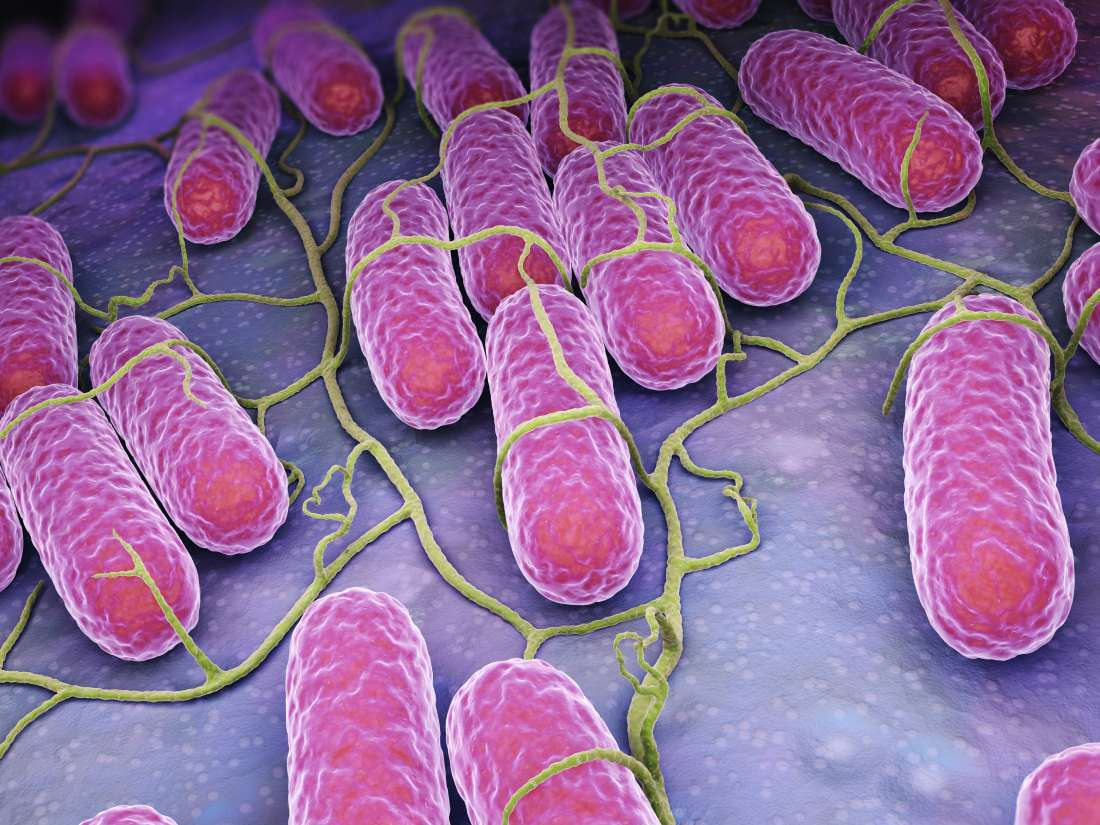 Salmonella: Symptoms, causes, and treatment