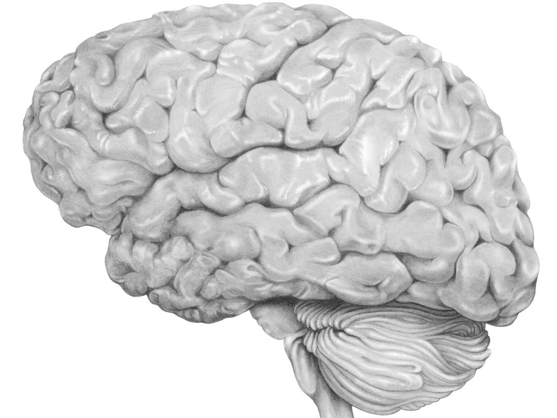 A Brain System That Appears To >> Encephalitis Types Symptoms Causes And Treatment