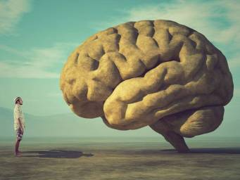 Top 7 things you need to know about the brain
