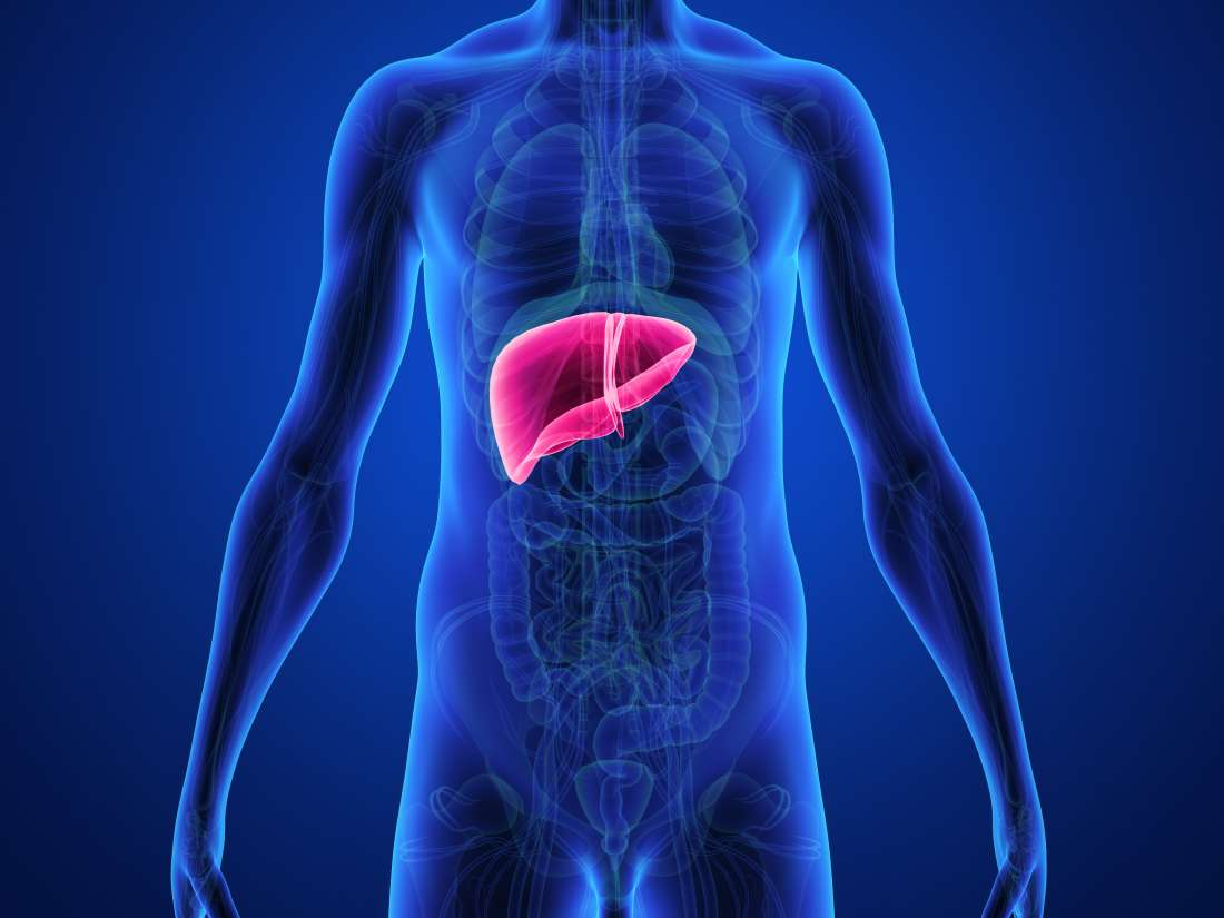 Liver fibrosis: Stages, symptoms, and treatment