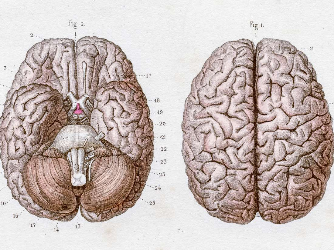 5 key facts about language and the brain