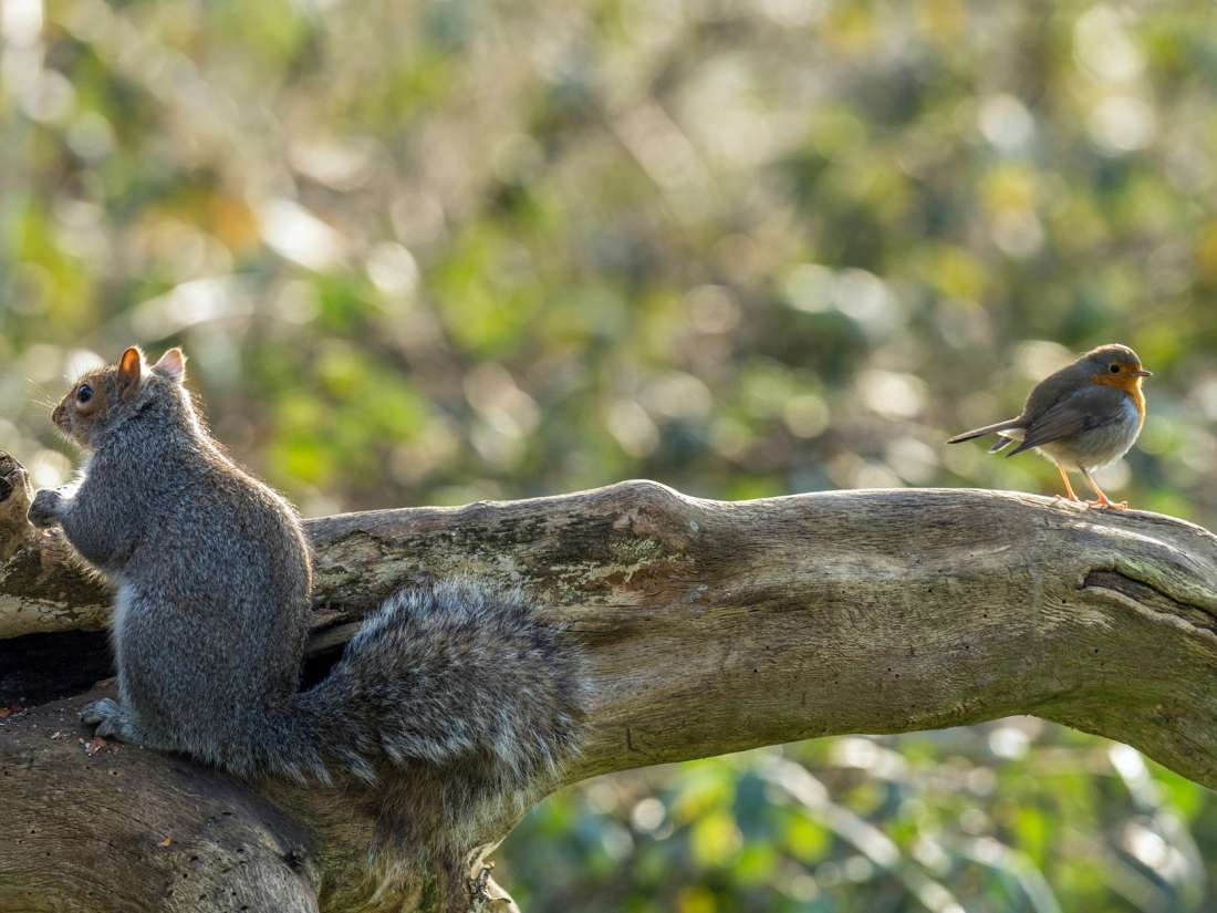 How birds let squirrels know when it's safe to relax