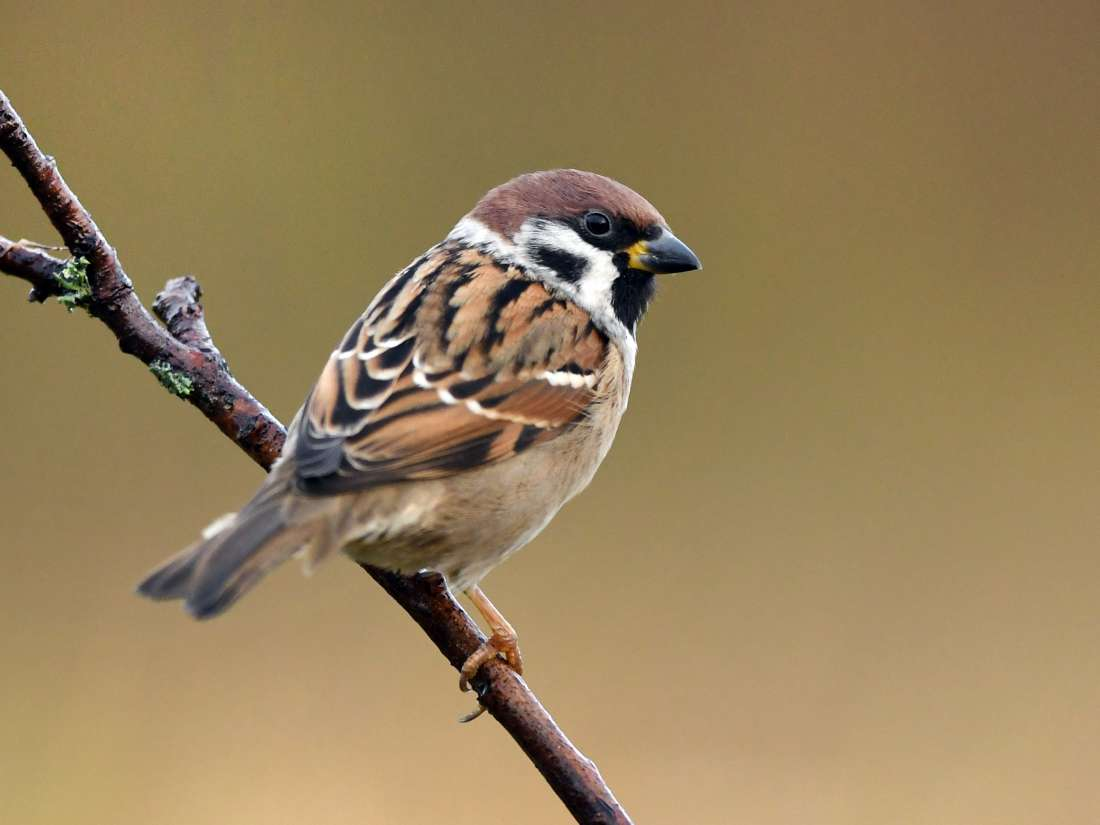 Global warming may cause birds to shrink