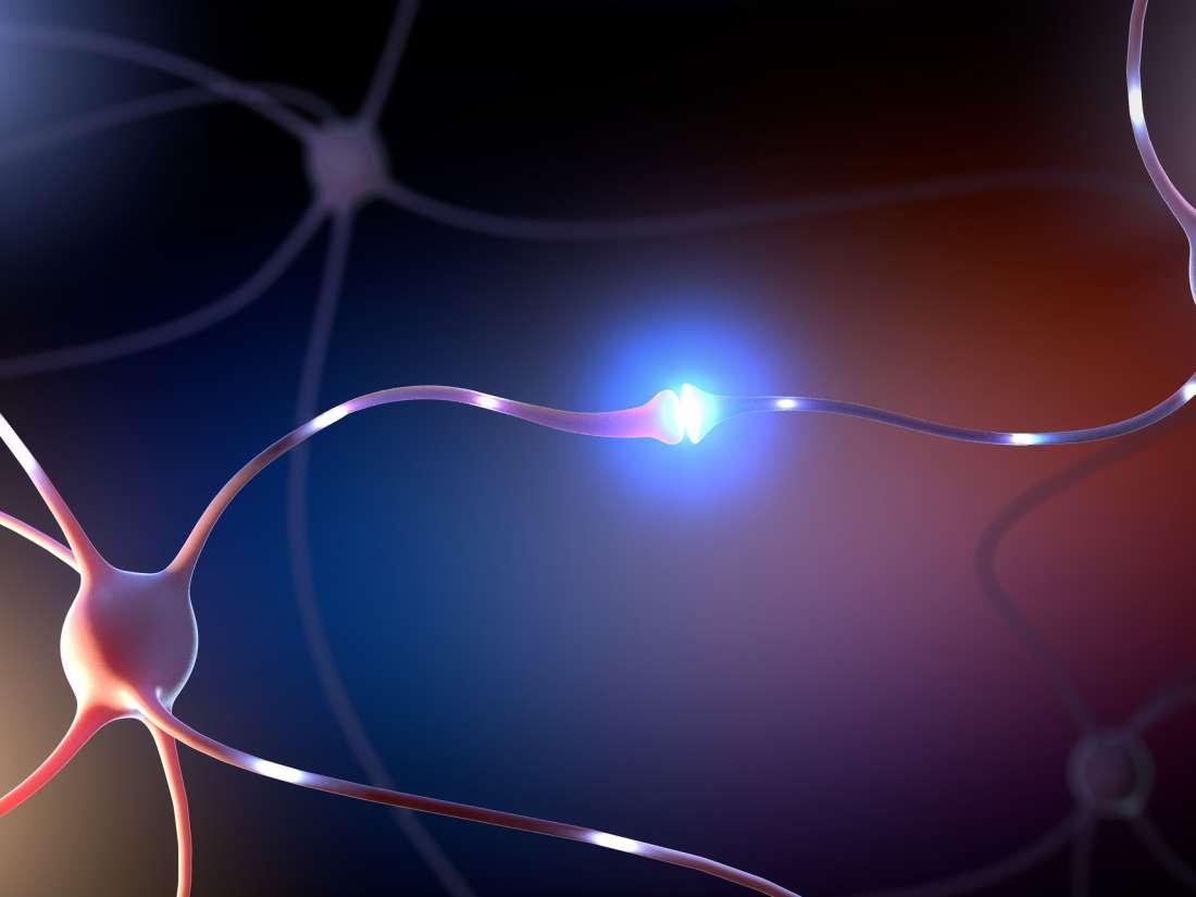 Transport breakdown in brain cells may lead to Alzheimer's, Parkinson's